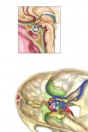 pituitary-final